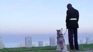 Storey with his dog, Woja, honoring fallen soldiers.